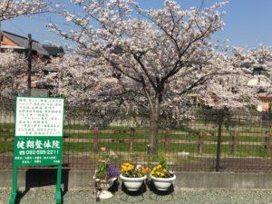 健翔整体院本院前の桜(大野城市横峰)