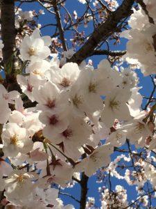 桜 健翔整体院